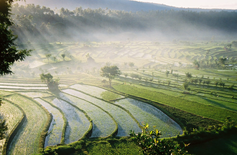 The rice paddies of Tirta Gangga at dawn